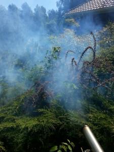 zwalczanie komarow i kleszczy