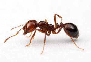 mrówkaa